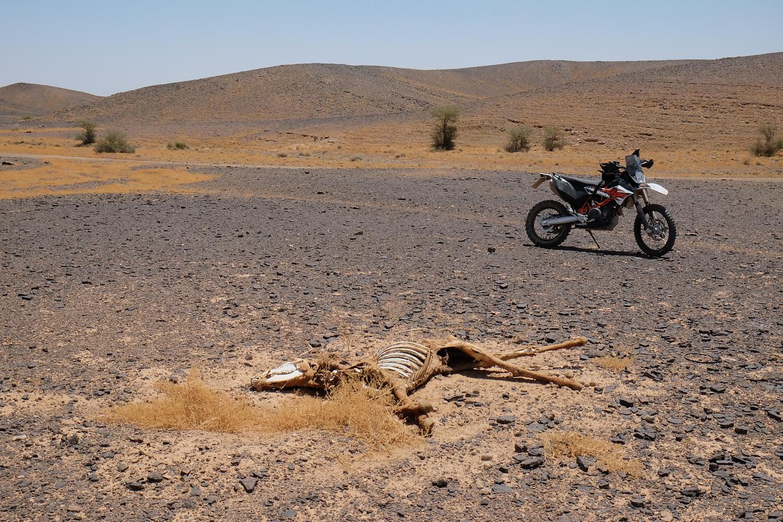 Marokko Reise 2015